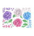 set collection of lilac hydrangea flowers leaves vector image