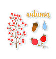 autumn stickers set with berries and acorn vector image
