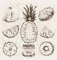 digital detailed line art pineapple vector image