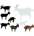 Goats vs vector image