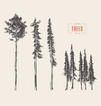 Set pine trees engraved style drawn vector image