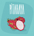 isolated ripe pitaya or pitahaya or dragon fruit vector image