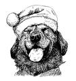 Labrador Retriever 18 vector image
