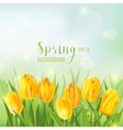 Spring Background - with Yellow Tulips Flowers vector image