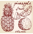 fruit pineapple set hand drawn llustration vector image vector image