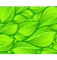 green leaves background texture vector image vector image