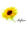 nature background with yellow sunflower vector image