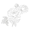 Peonies ink background vector image vector image