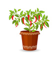 hot pepper in a flower pot vector image vector image