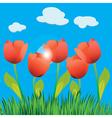 Tulip field vector image