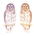 Watercolor cute owl in vintage style vector image