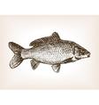 Carp fish hand drawn sketch vector image