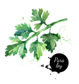 Watercolor hand drawn parsley Isolated organic vector image
