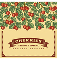 Retro cherry harvest card vector image vector image