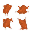 fried turkey different poses baked chicken fowl vector image