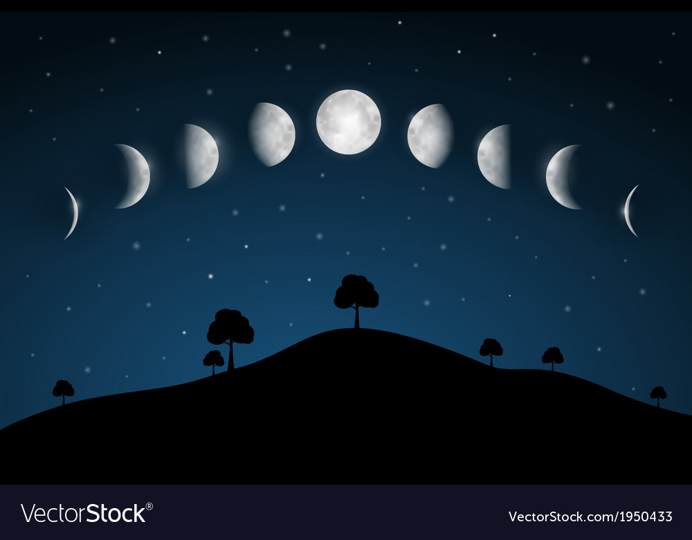 Moon phases  night landscape with trees vector