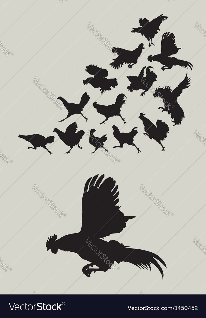 Rooster running silhouettes vector