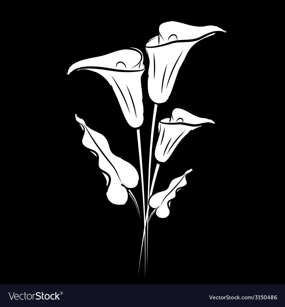 Calla lily black vector