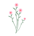 Old Rose Daisy Blossoms on A White Background vector image