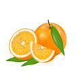fresh orange vector image