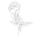 hand drawn floral vector image vector image