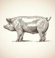 artistic pig sketch vector image