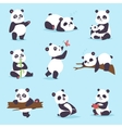 Panda bear set vector image
