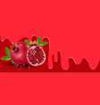 pomegranate fruit vector image