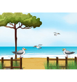Birds looking for foods at the beach vector image vector image