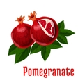 Ripe pomegranate fruits icon for food design vector image vector image
