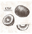 digital detailed kiwi hand drawn vector image vector image