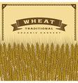 Retro wheat harvest card vector image