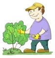 gardener cuts a bush vector image