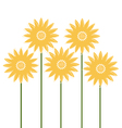 Beautiful Sunflowers isolated on white vector image vector image