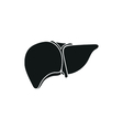 human liver on white vector image