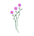 Purple Daisy Blossoms on A White Background vector image