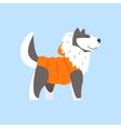 Husky Dog In Padded Coat Arctic Animal Dressed In vector image