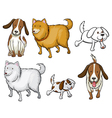 Different specie of dogs vector image vector image