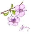 floral card with cherry blossoms flowers vector image