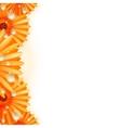 Gerber petals with water drops plus EPS10 vector image