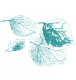 Leaf of birch tree vector image