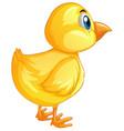 little chicks turning back vector image