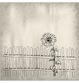 sunflower with fence on the background vector image
