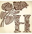hydrangea vector image