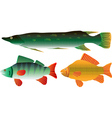 pike carp and perch vector image
