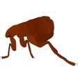 cartoon image of flea isolated on white vector image