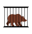 Bear in cage Animal in Zoo behind bars Big beast vector image