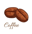 Coffee beans isolated sketch icon vector image