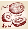 fruit kiwi set hand drawn llustration vector image