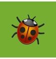 Ladybird Bug on Green Leaf vector image